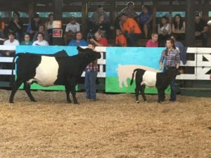 Cover photo for Catawba Valley Beef Expo