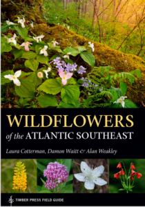 Wildflowers of the Atlantic Sutheast
