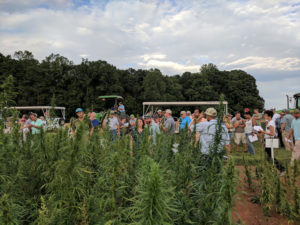 Industrial hemp field day.