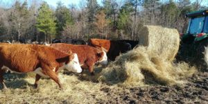 Cover photo for Pasture Management Class *Winter Focus*