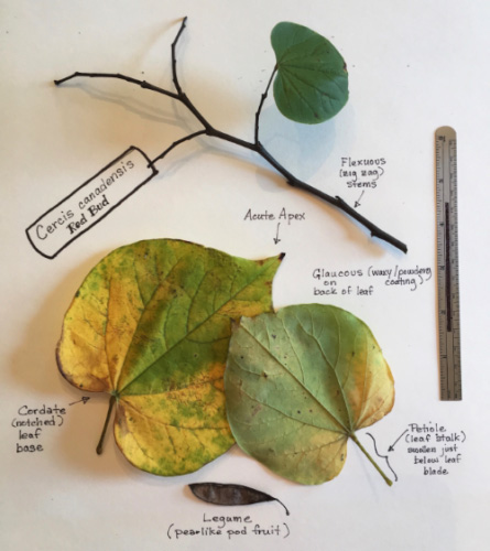Sample plant ID project