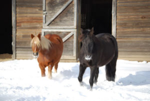 Horses in snow with shelter behind them