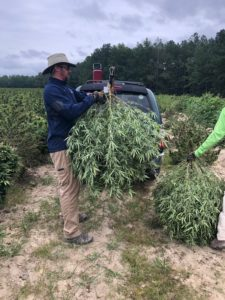 Cover photo for 2019 North Carolina Hemp Strain Testing Results