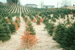 Cover photo for Selecting Sites for Fraser Fir Production