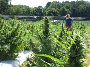 Woman in hemp field