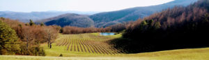 Cover photo for COVID-19 Farming and Viticulture Resources