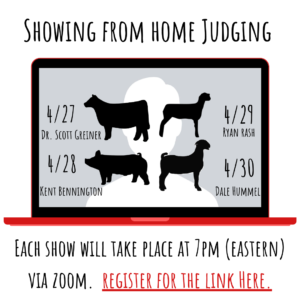 Cover photo for Showing From Home Virtual Livestock Show