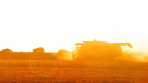 As the sun sets on a warm Fall day, a farmer harvests a soybean field in North Carolina.