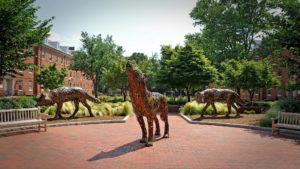 Three copper wolf structures on central campus at NC State University