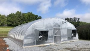 tomato breeding greenhouse