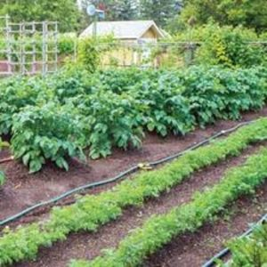 Cover photo for Tips and Methods on Watering the Garden