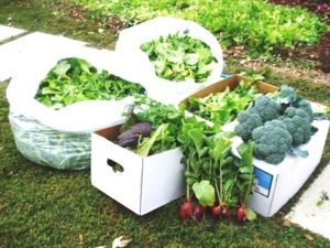 Cover photo for Think Green Thursday - Fall Vegetable Gardening