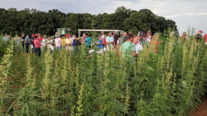 Participants gather in a field of hemp plants to learn about NC State University's hemp research and Extension efforts.