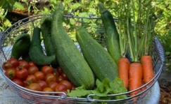 zucchini, carrots,cucumbers, cherry tomatoes, thyme in a basket