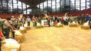 youth in a semicircle with their market turkeys