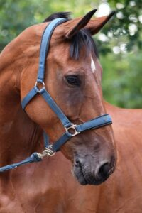photo of a horse with a blue bridle