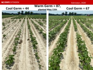 Cover photo for UPDATE 4-12-2021: Your Role and Responsibility in Making the NCDA&CS Cotton Seed Quality Testing Program Work to Your Benefit (Collins, Edmisten, Stewart, Wilson, Snyder, & Williams)
