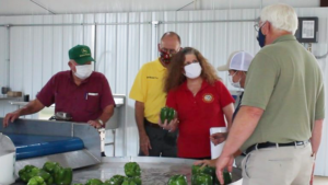 Anita MacMullan and Steve Troxler in masks looking at bell peppers at the Piedmont Research Station