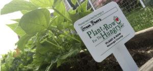 sign marking green beans in a garden