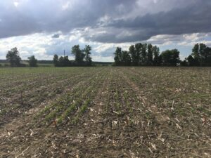 Cover photo for PFP21: Soybean Preemergence Herbicide Decisions