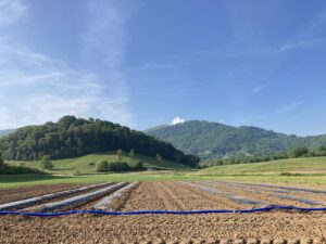 Tilled organic fields with mountains