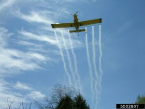an airplane flies low over a forest, releasing pheromone