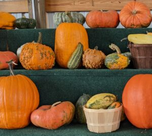 Cover photo for Saving Gourd and Pumpkin Seeds!